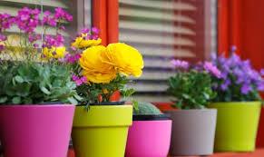 balcon fleuri 6
